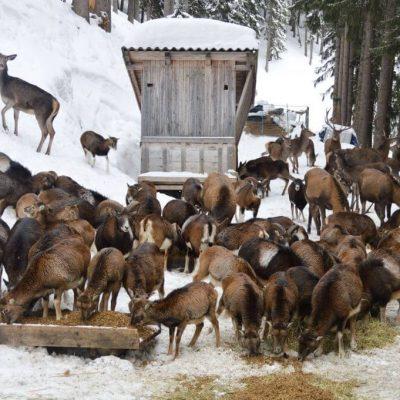dierenvoeren winter